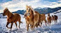 horses snow running 4k 1602359156 200x110 - Horses Snow Running 4k - Horses Snow Running 4k wallpapers
