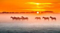 horses sunset 4k 1602359198 200x110 - Horses Sunset 4k - Horses Sunset 4k wallpapers