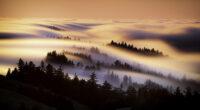 marin county mist morning 4k 1602606181 200x110 - Marin County Mist Morning 4k - Marin County Mist Morning 4k wallpapers