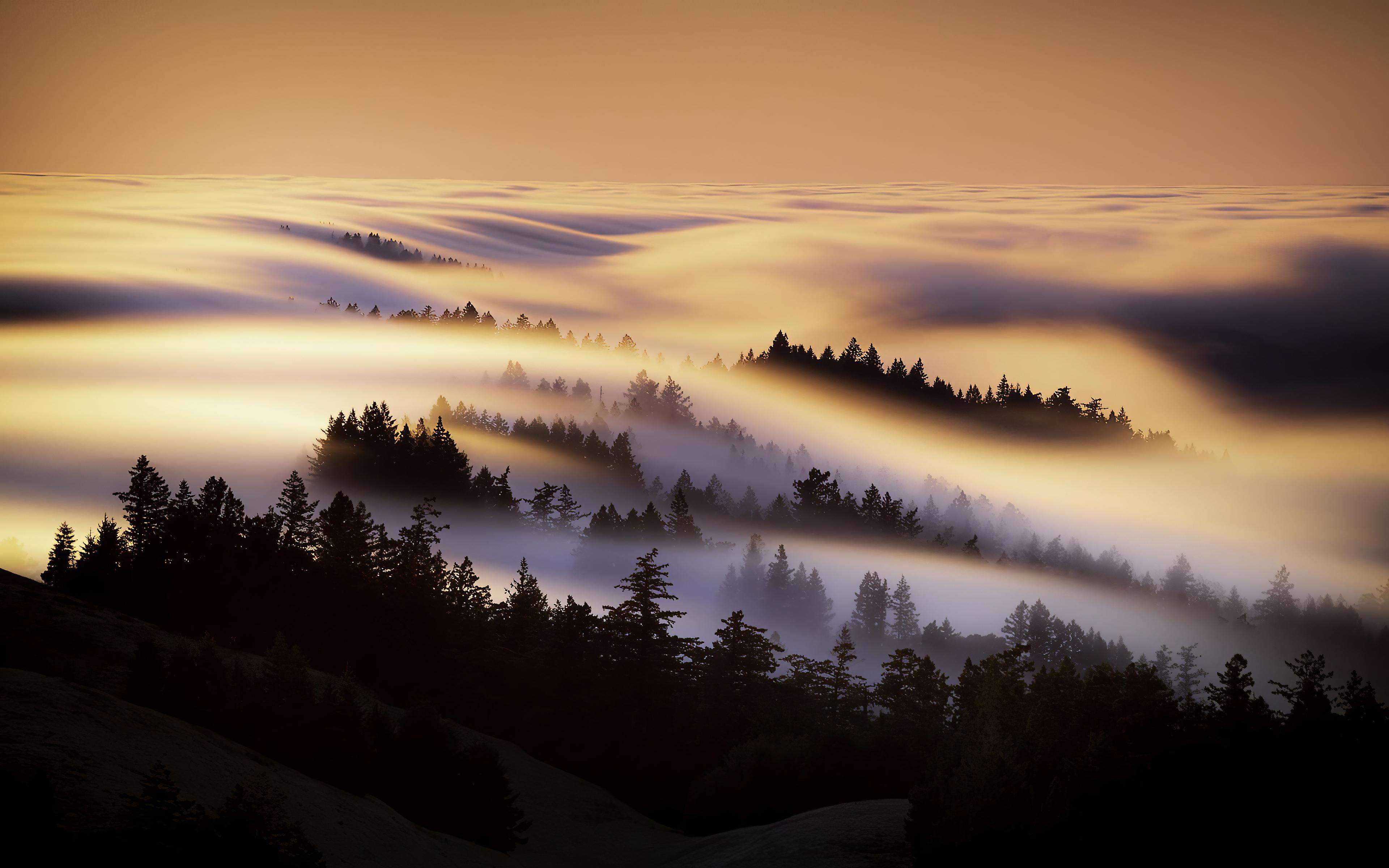 marin county mist morning 4k 1602606181 - Marin County Mist Morning 4k - Marin County Mist Morning 4k wallpapers