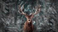 reinderr snow 4k 1603014719 200x110 - Reinderr Snow 4k - Reinderr Snow 4k wallpapers