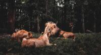 three lions lying down 4k 1602359153 200x110 - Three Lions Lying Down 4k - Three Lions Lying Down 4k wallpapers