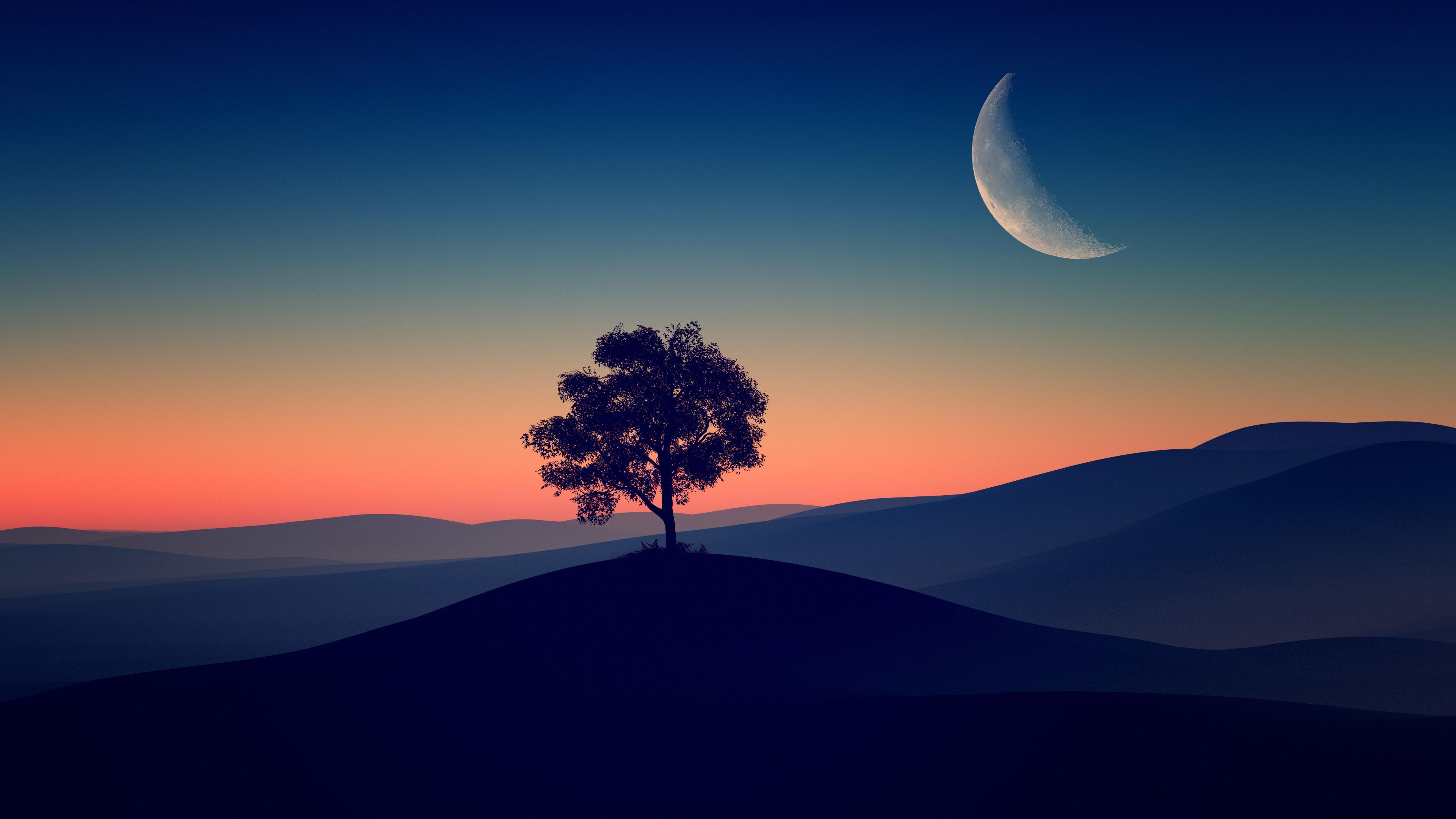 tree alone dark evening 4k 1602501593 - Tree Alone Dark Evening 4k - Tree Alone Dark Evening 4k wallpapers