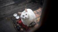 white kitty 4k 1602359218 200x110 - White Kitty 4k - White Kitty 4k wallpapers
