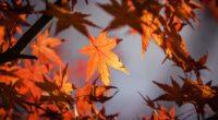 autumn leaves 4k 1606509505 200x110 - Autumn Leaves 4k - Autumn Leaves 4k wallpapers