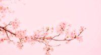 blossom flower plant 4k 1606575168 200x110 - Blossom Flower Plant 4k - Blossom Flower Plant 4k wallpapers