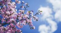blossom flowers 4k 1606513640 200x110 - Blossom Flowers 4k - Blossom Flowers 4k wallpapers