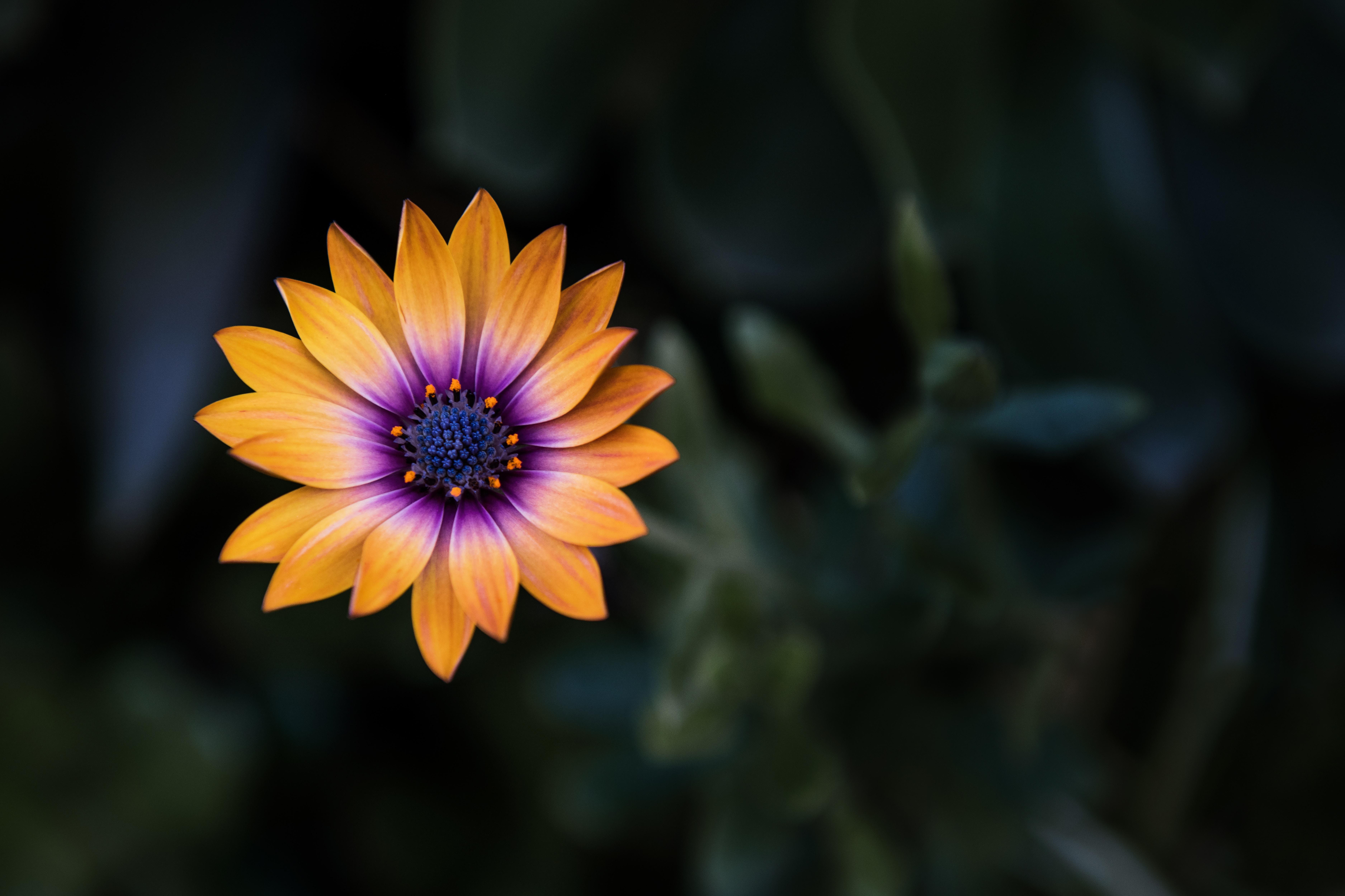 bright orange purple flower 4k 1606577720 - Bright Orange Purple Flower 4k - Bright Orange Purple Flower 4k wallpapers