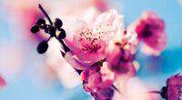 cherry blossom 4k 1606508938 200x110 - Cherry Blossom 4k - Cherry Blossom 4k wallpapers
