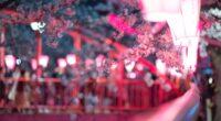 cherry blossom flora flowers 4k 1606569249 200x110 - Cherry Blossom Flora Flowers 4k - Cherry Blossom Flora Flowers 4k wallpapers
