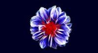 colorful flower art 4k 1606509606 200x110 - Colorful Flower Art 4k - Colorful Flower Art 4k wallpapers