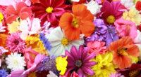 colorful hd flowers 4k 1606508437 200x110 - Colorful HD Flowers 4k - Colorful HD Flowers 4k wallpapers