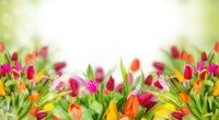 colorful tulips 4k 1606508938 200x110 - Colorful Tulips 4k - Colorful Tulips 4k wallpapers