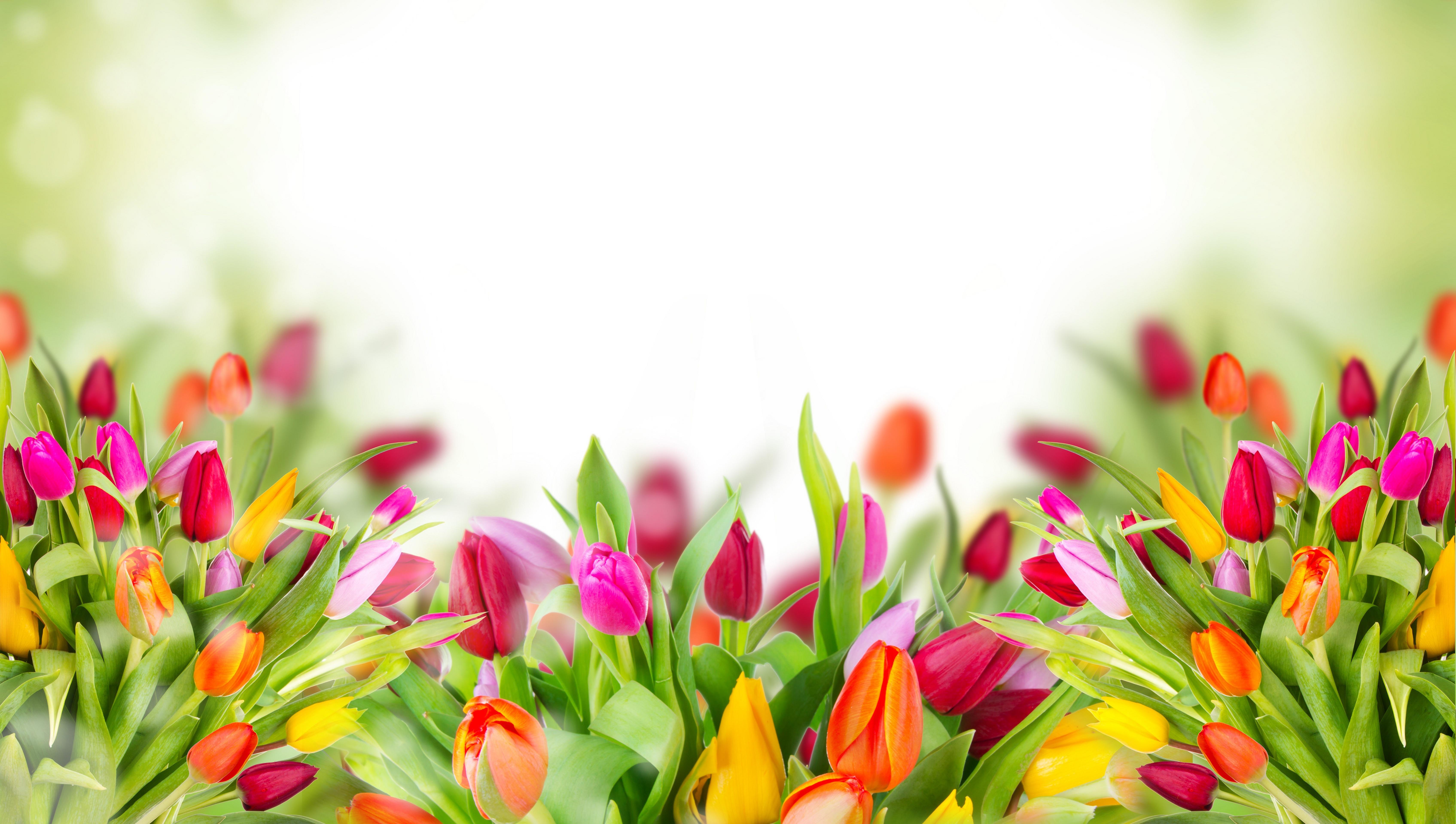 colorful tulips 4k 1606508938 - Colorful Tulips 4k - Colorful Tulips 4k wallpapers