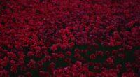 flowers bed 4k 1606575218 200x110 - Flowers Bed 4k - Flowers Bed 4k wallpapers