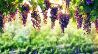 grape 4k 1606509606 200x110 - Grape 4k - Grape 4k wallpapers