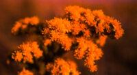 kodachrome flowers 4k 1606577719 200x110 - Kodachrome Flowers 4k - Kodachrome Flowers 4k wallpapers