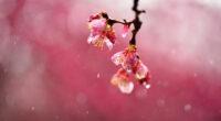 macro blossom flowers dews 4k 1606577705 1 200x110 - Macro Blossom Flowers Dews 4k - Macro Blossom Flowers Dews 4k wallpapers