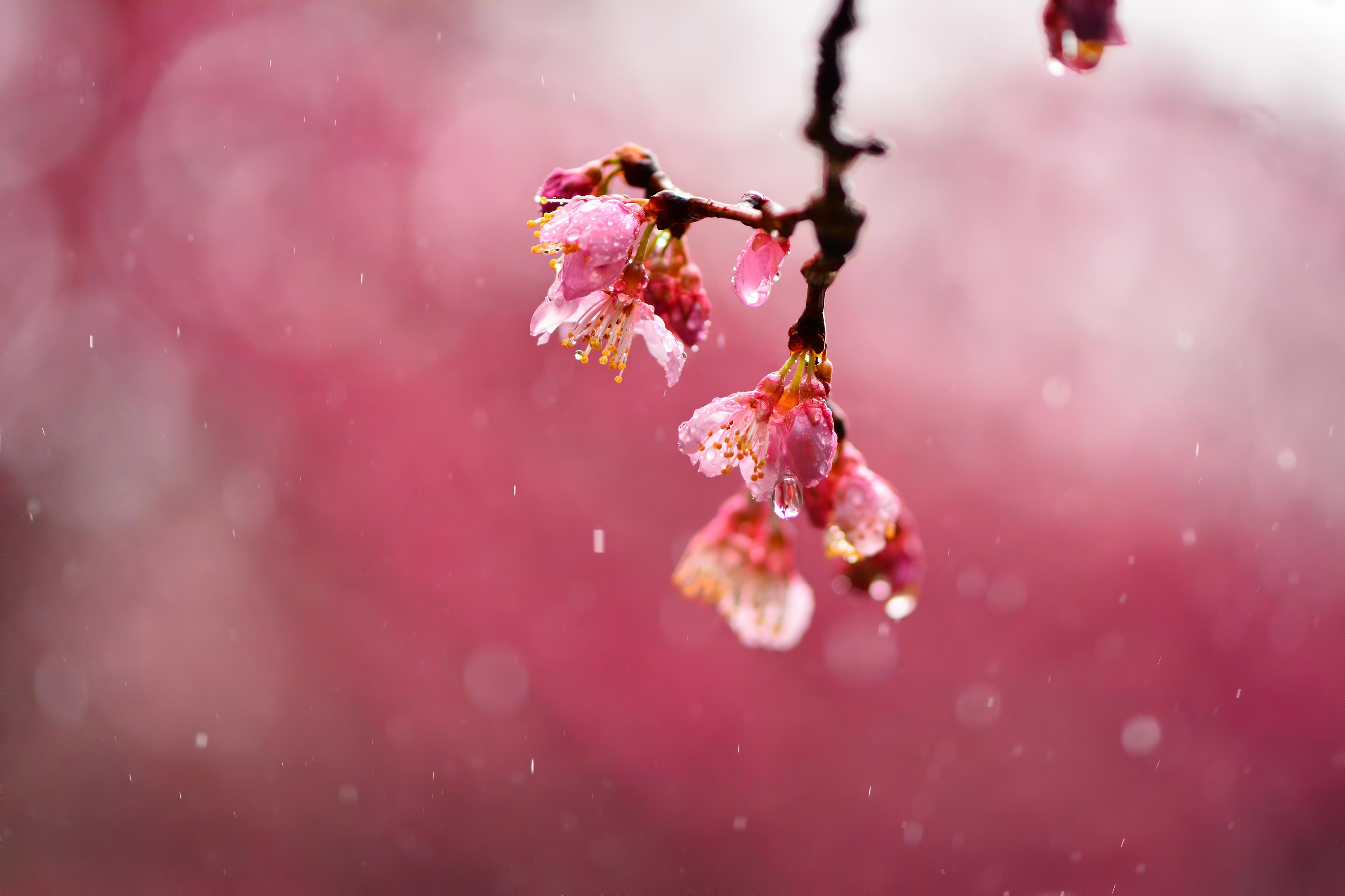 macro blossom flowers dews 4k 1606577705 1 - Macro Blossom Flowers Dews 4k - Macro Blossom Flowers Dews 4k wallpapers