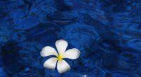 plumeria flower water 4k 1606509505 200x110 - Plumeria Flower Water 4k - Plumeria Flower Water 4k wallpapers