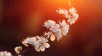 purdown blossom 4k 1606577660 200x110 - Purdown Blossom 4k - Purdown Blossom 4k wallpapers