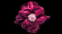 purple flower oled 4k 1606513640 200x110 - Purple Flower Oled 4k - Purple Flower Oled 4k wallpapers