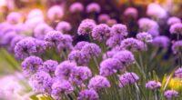 purple flowers 4k 1606575072 200x110 - Purple Flowers 4k - Purple Flowers 4k wallpapers