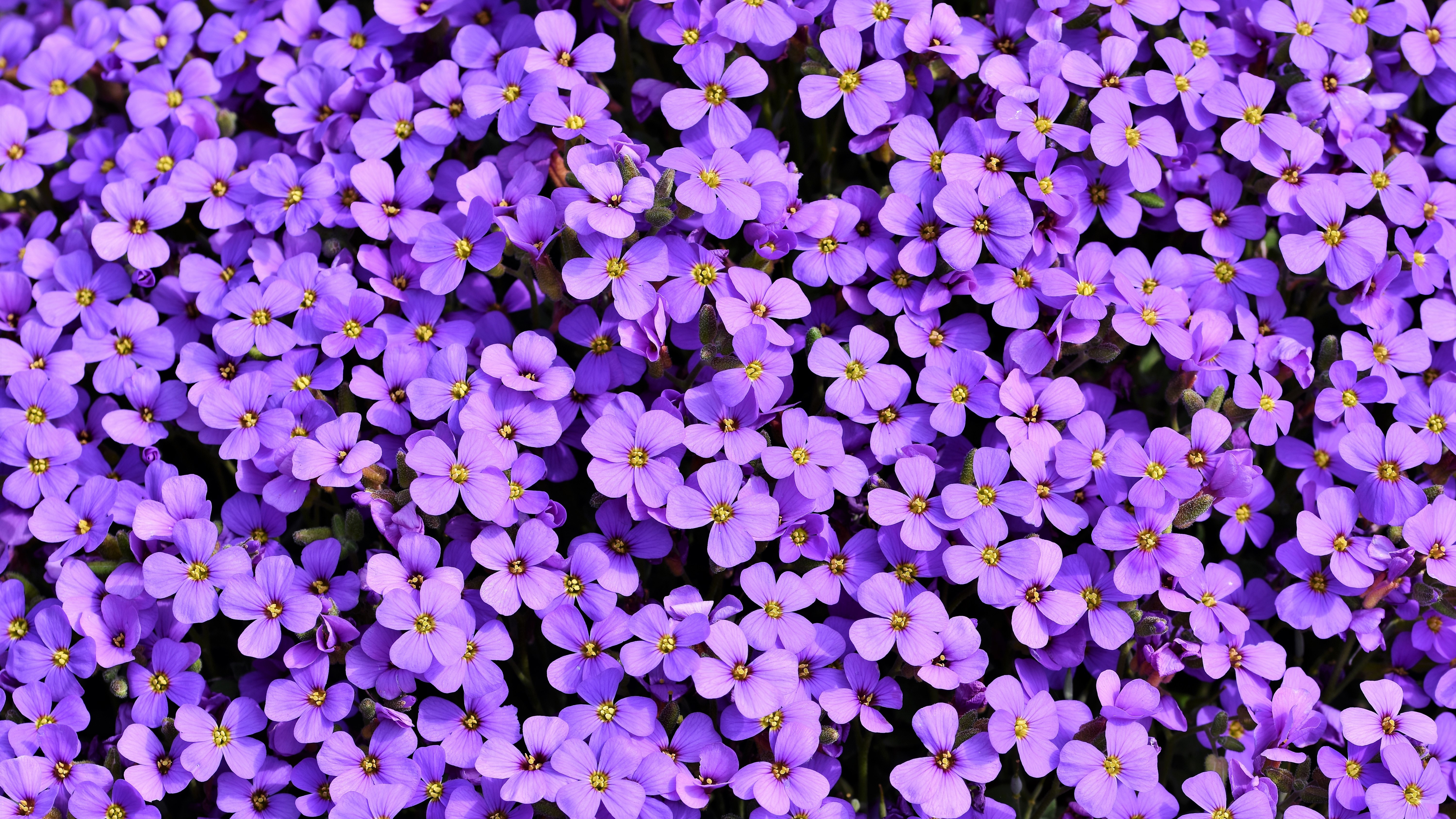 purple flowers background 5k 1606577835 - Purple Flowers Background 5k - Purple Flowers Background 5k wallpapers