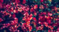 red pearls flowers 4k 1606575218 200x110 - Red Pearls Flowers 4k - Red Pearls Flowers 4k wallpapers