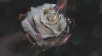 rose fire photography smoke 4k 1606510526 200x110 - Rose Fire Photography Smoke 4k - Rose Fire Photography Smoke 4k wallpapers