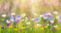 spring 4k 1606508861 200x110 - Spring 4k - Spring 4k wallpapers
