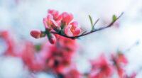 spring blossom 4k 1606577700 200x110 - Spring Blossom 4k - Spring Blossom 4k wallpapers