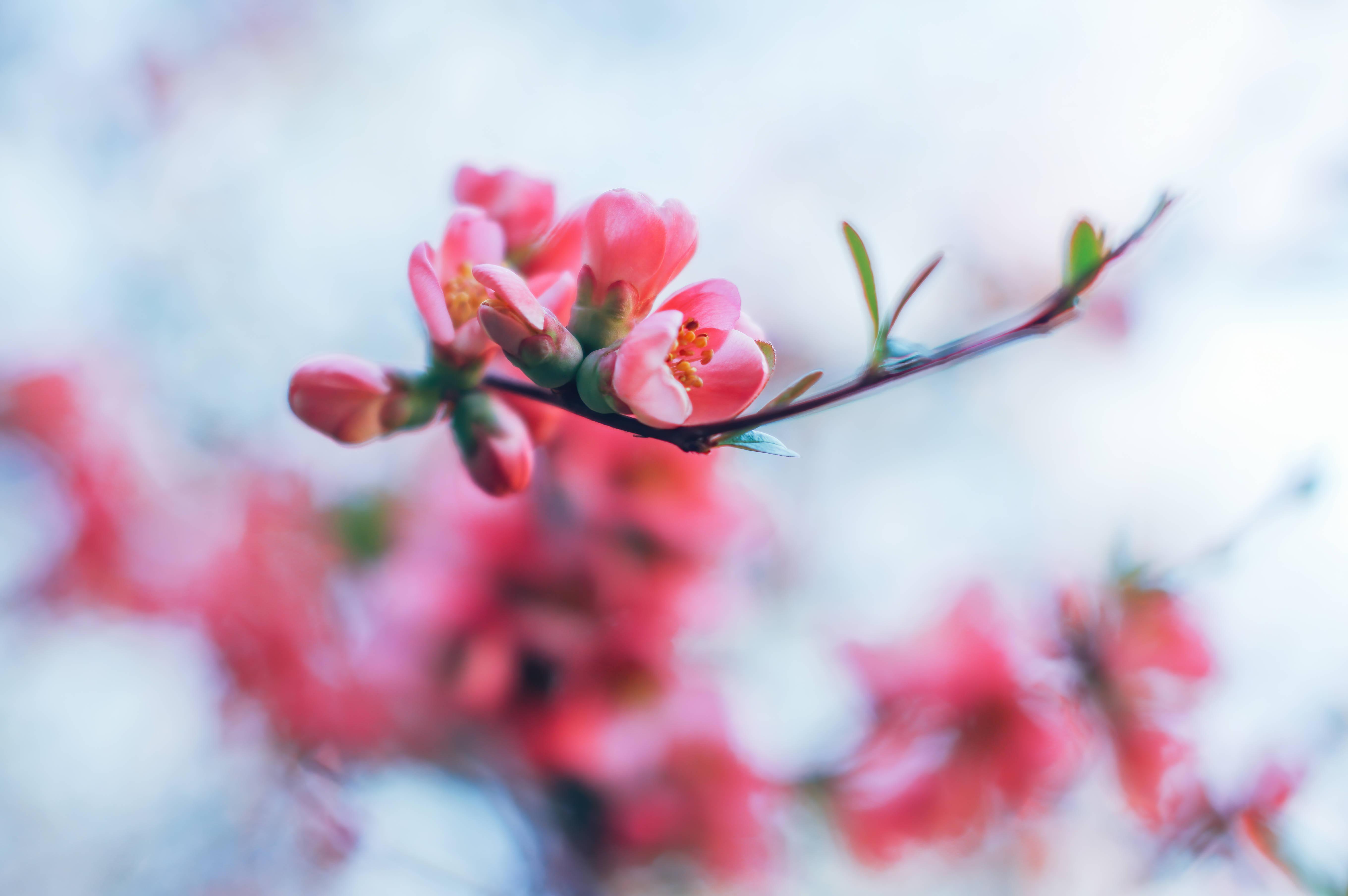 spring blossom 4k 1606577700 - Spring Blossom 4k - Spring Blossom 4k wallpapers