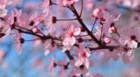 spring season flowers 4k 1606510526 200x110 - Spring Season Flowers 4k - Spring Season Flowers 4k wallpapers