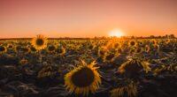 sunflowers farm golden hour 4k 1606513818 200x110 - Sunflowers Farm Golden Hour 4k - Sunflowers Farm Golden Hour 4k wallpapers