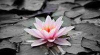 water lily 4k 1606512712 200x110 - Water Lily 4k - Water Lily 4k wallpapers