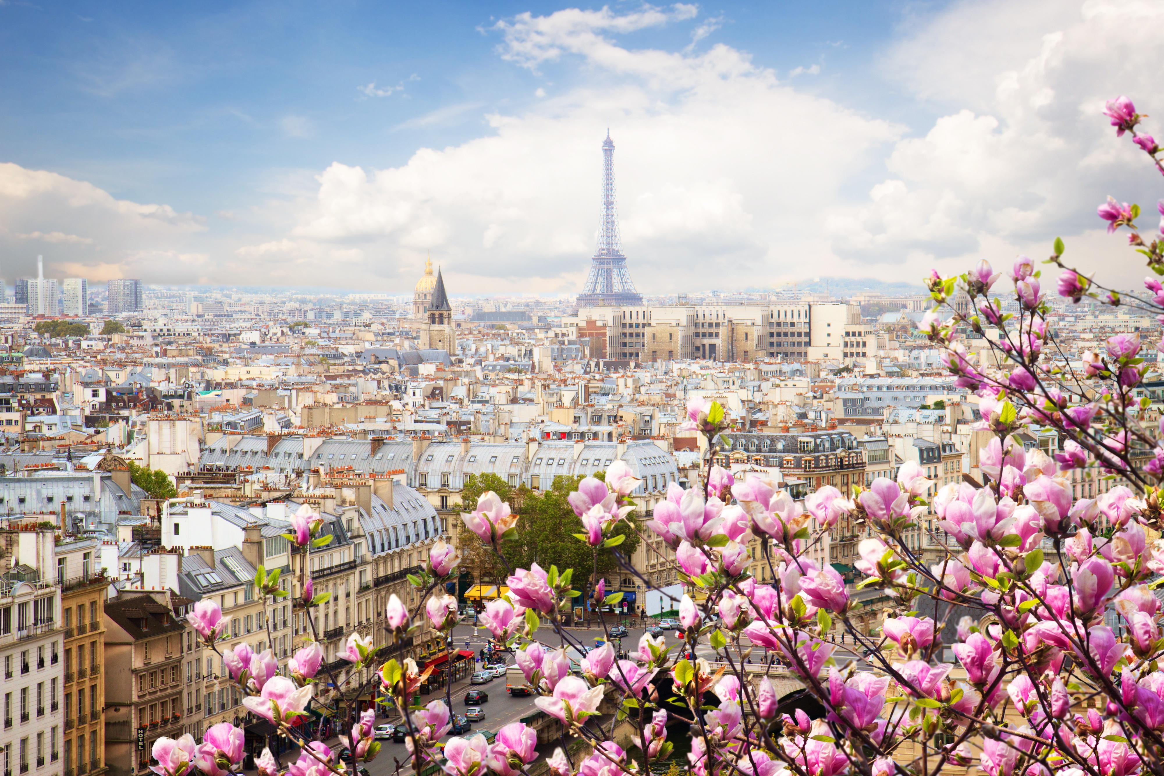 eiffel tower france flowers beautiful 4k 1608983171 - Eiffel Tower France Flowers Beautiful 4k - Eiffel Tower France Flowers Beautiful 4k wallpapers