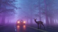beware of the deer 1614443619 200x110 - Beware Of The Deer - Beware Of The Deer wallpapers