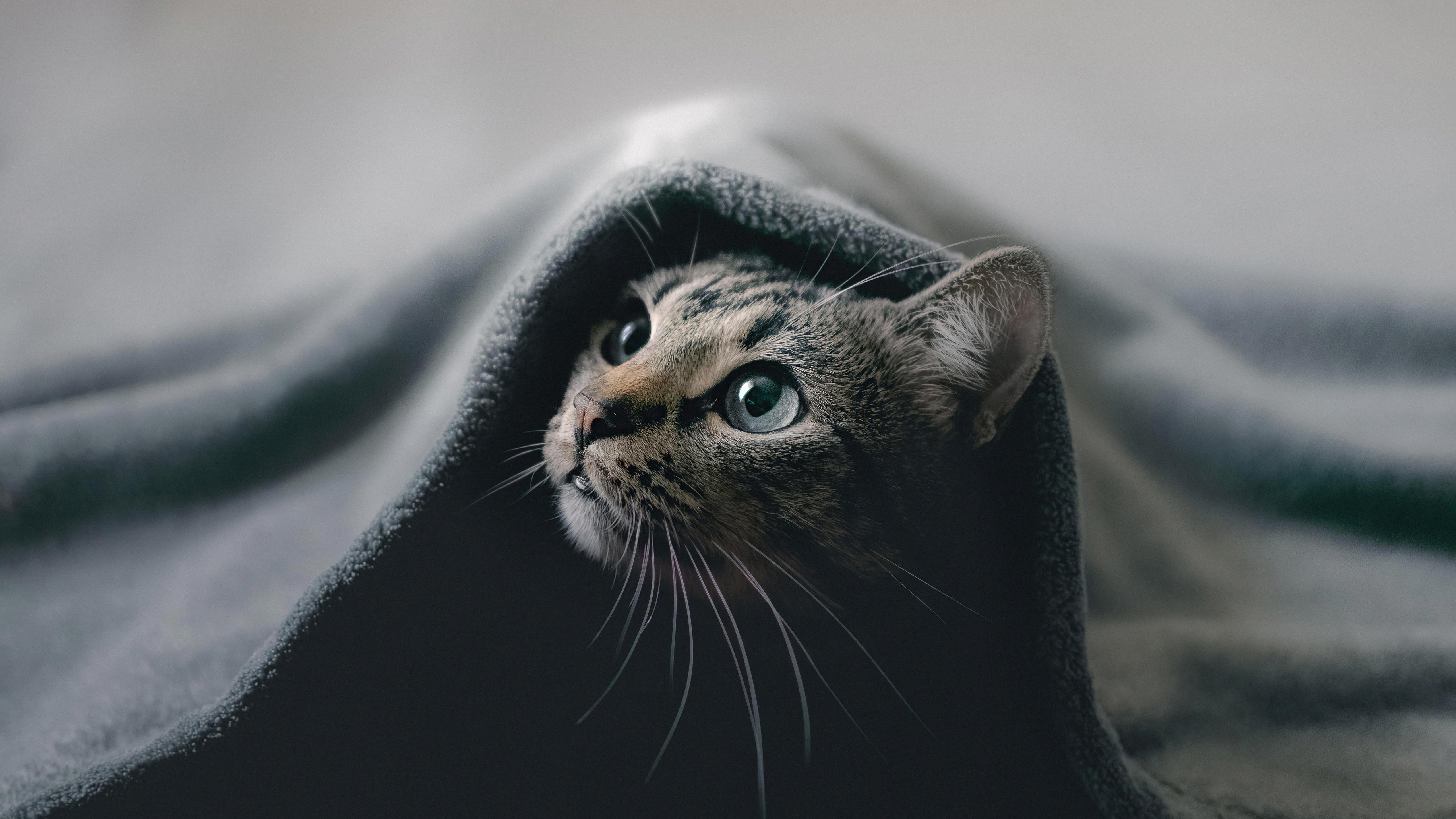 cat hideout 4k 1616873300 - Cat Hideout 4k - Cat Hideout 4k wallpapers