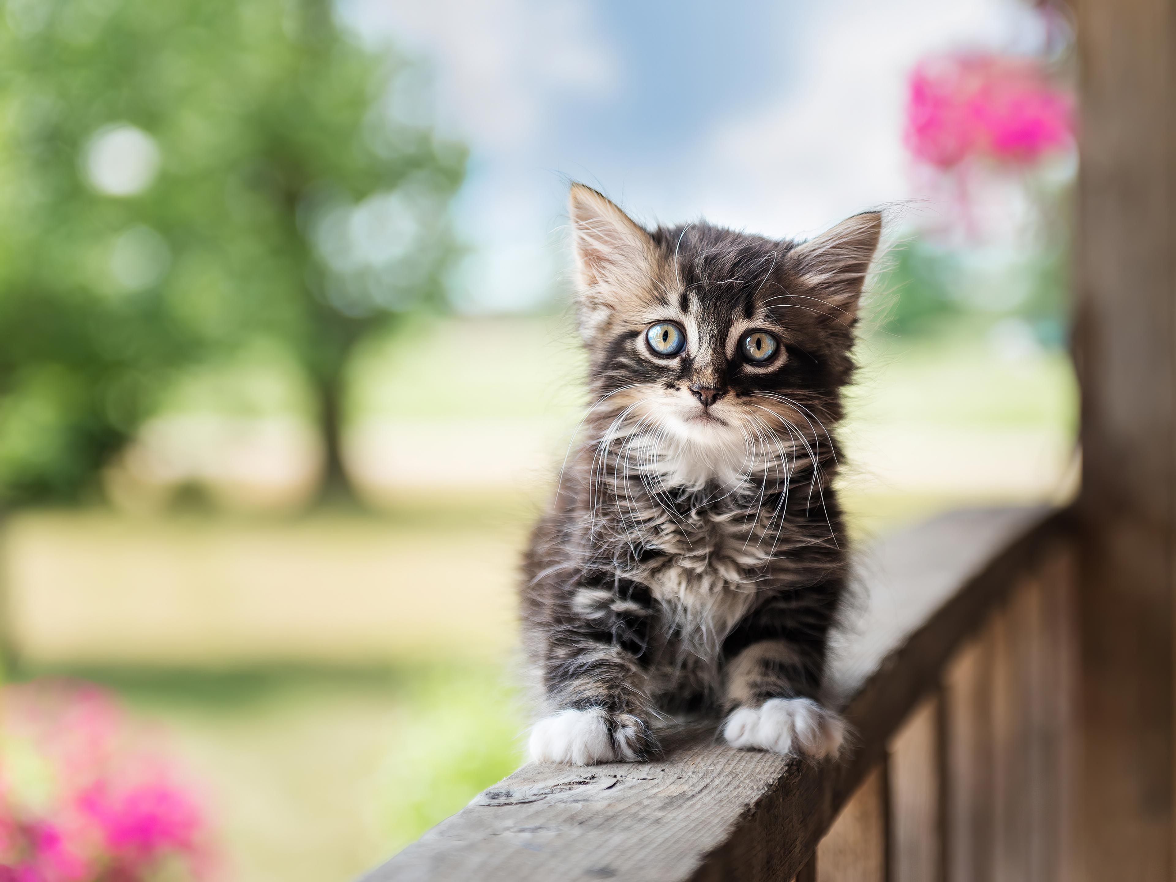 cute cat 4k 1615884666 - Cute Cat 4k - Cute Cat 4k wallpapers