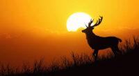 deer silhouette evening 4k 1616872023 200x110 - Deer Silhouette Evening 4k - Deer Silhouette Evening 4k wallpapers
