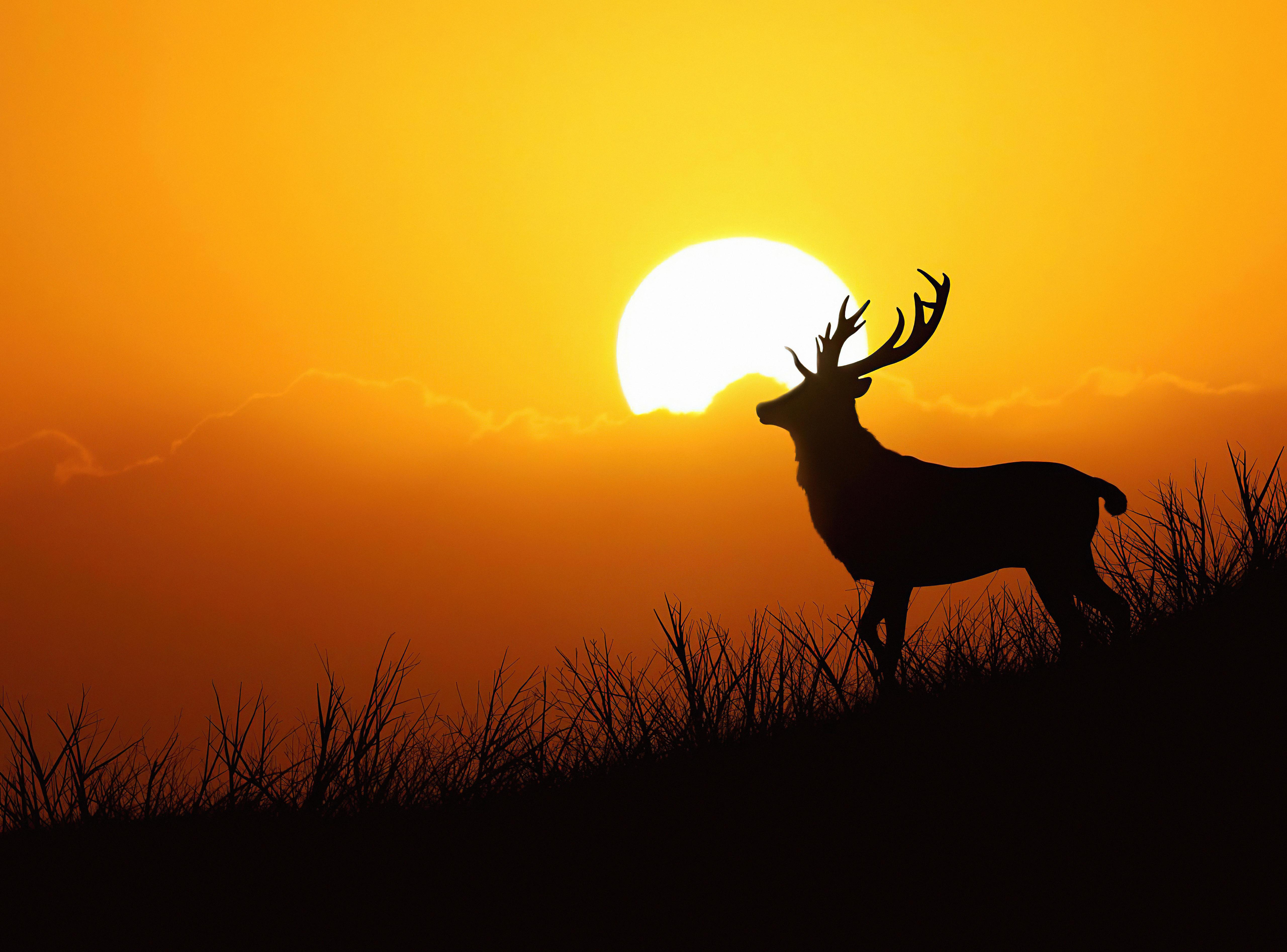 deer silhouette evening 4k 1616872023 - Deer Silhouette Evening 4k - Deer Silhouette Evening 4k wallpapers