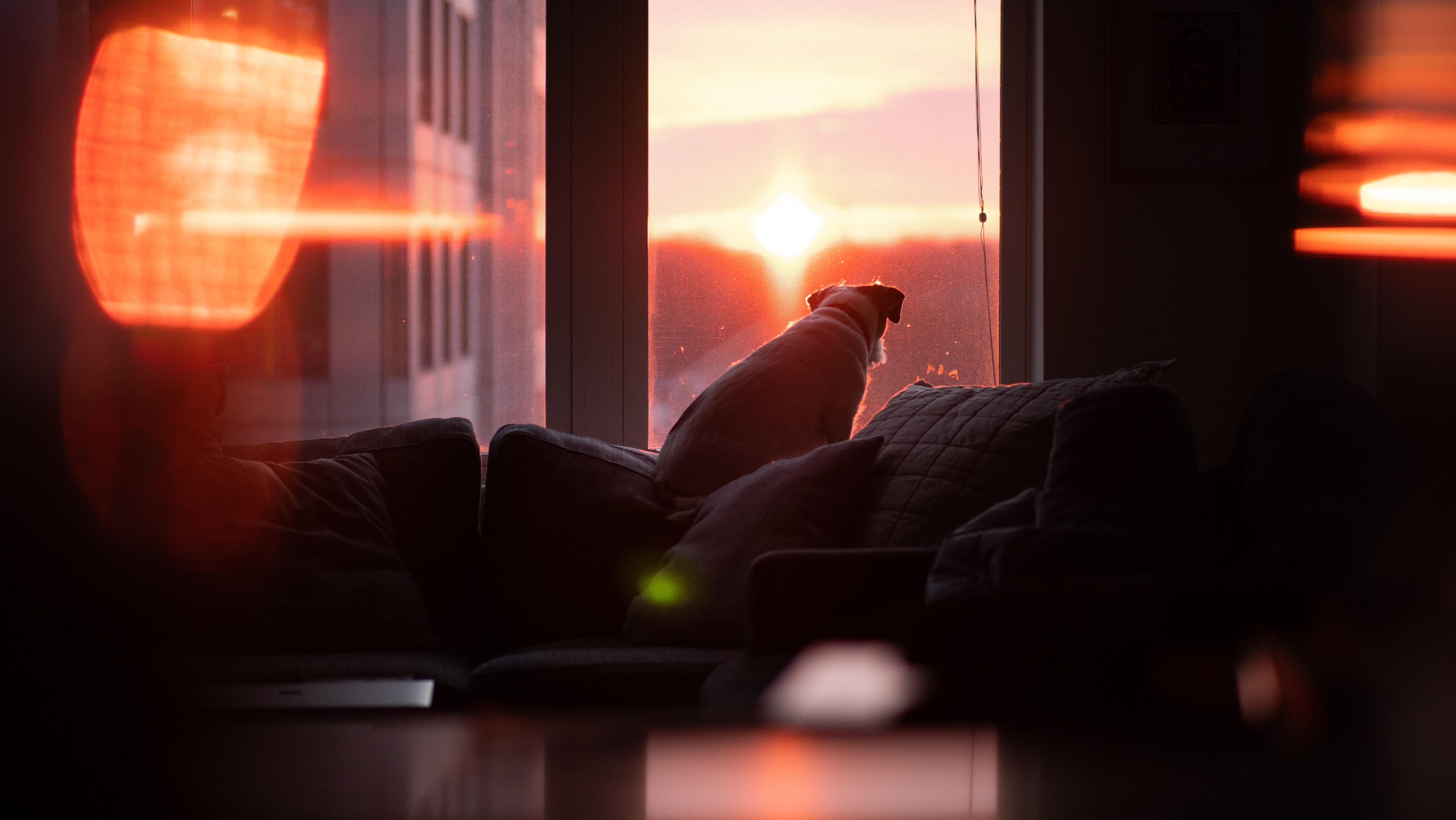 dog watching sunset 4k 1616093496 - Dog Watching Sunset 4k - Dog Watching Sunset 4k wallpapers