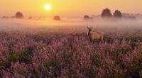 heathland deer 4k 1615884681 200x110 - Heathland Deer 4k - Heathland Deer 4k wallpapers