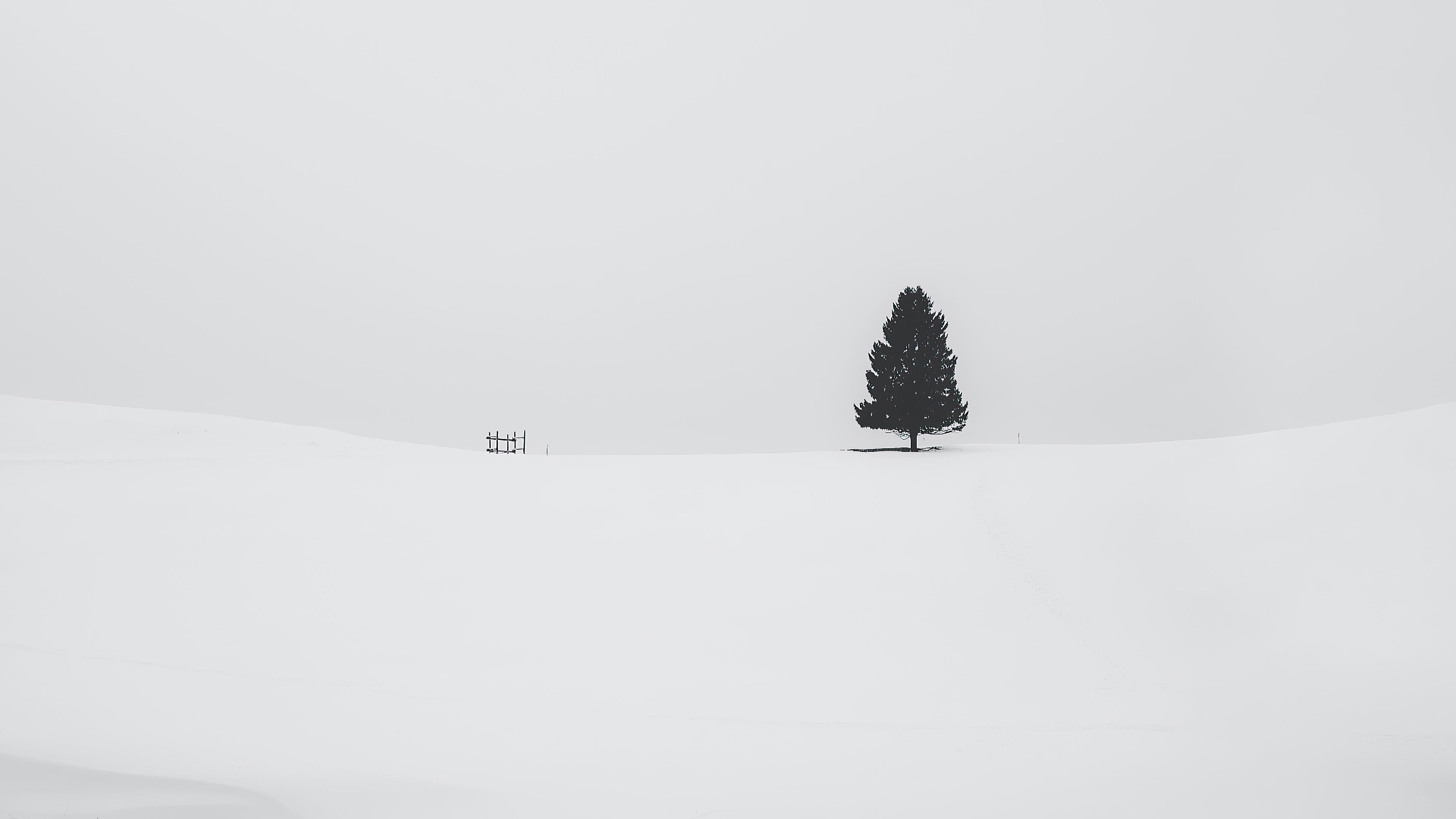 tree snow 4k 1615197744 - Tree Snow 4k - Tree Snow 4k wallpapers