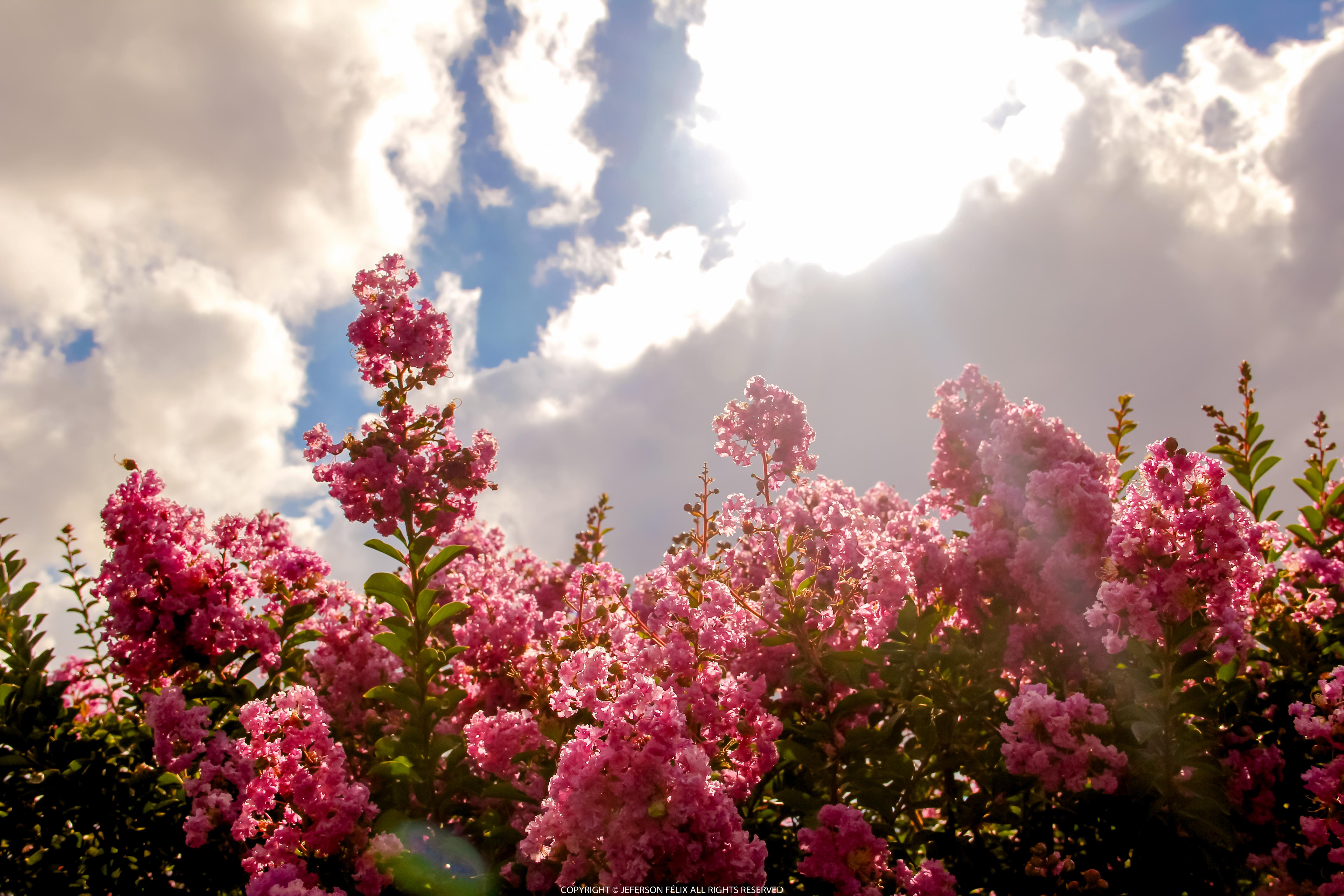 blossom flowers field 4k 1629229635 - Blossom Flowers Field 4k - Blossom Flowers Field wallpapers, Blossom Flowers Field 4k wallpapers