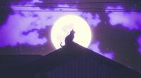 cat rooftop silhouette 4k 1629137132 200x110 - Cat Rooftop Silhouette 4k - Cat Rooftop Silhouette wallpapers, Cat Rooftop Silhouette 4k wallpapers