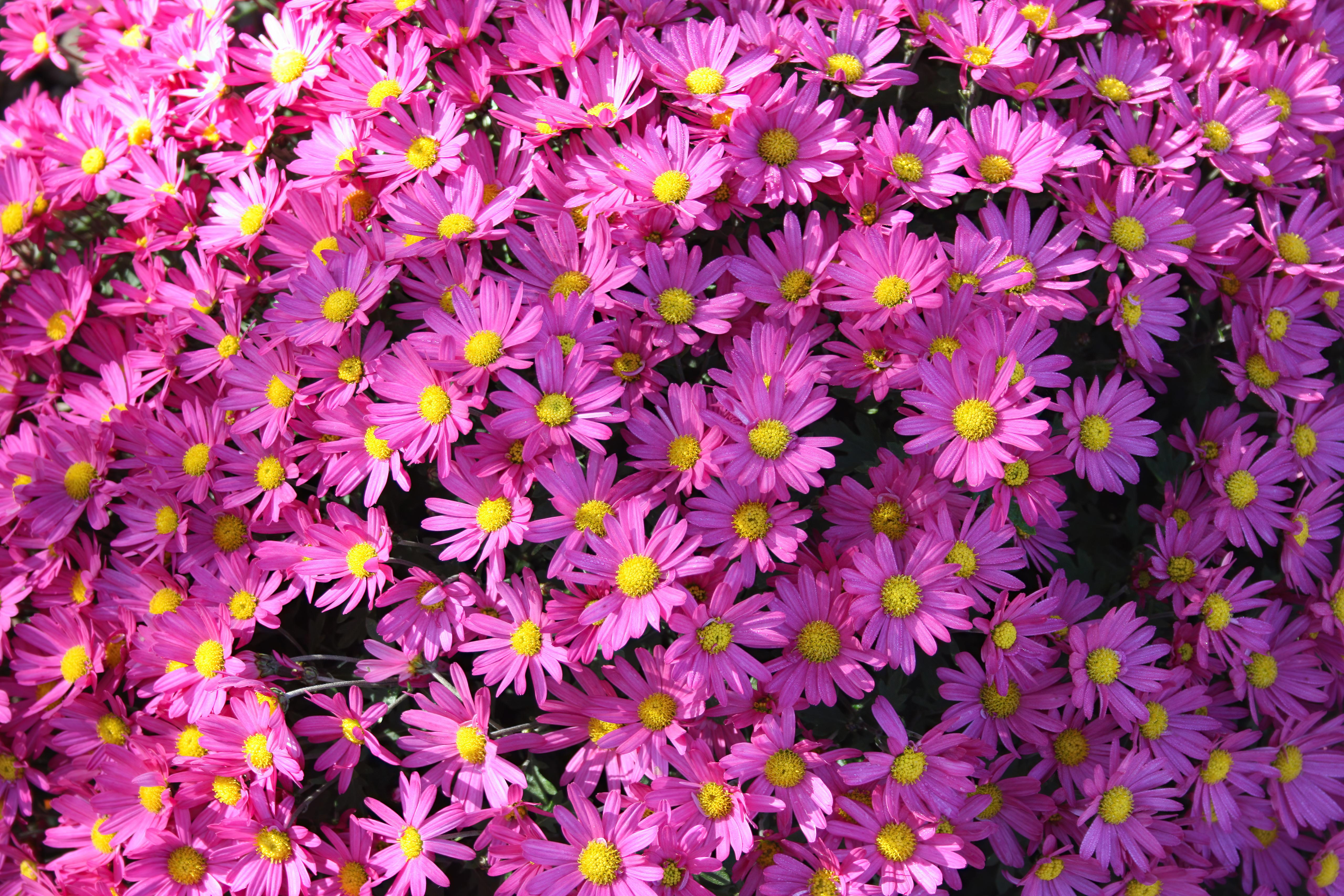 violet flowers 4k 1630616437 - Violet Flowers 4k - Violet Flowers wallpapers, Violet Flowers 4k wallpapeers