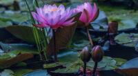 water lilies in pond 4k 1630616437 200x110 - Water Lilies In Pond 4k - Water Lilies In Pond wallpapers, Water Lilies In Pond 4k wallpaperes